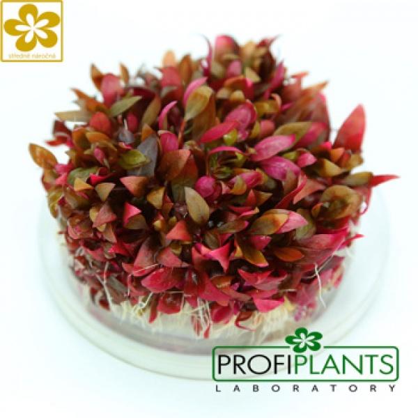 Středně náročné rostliny