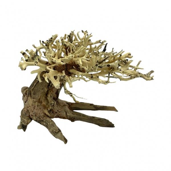 Bonsai Driftwood 20x15 cm (no. 10)