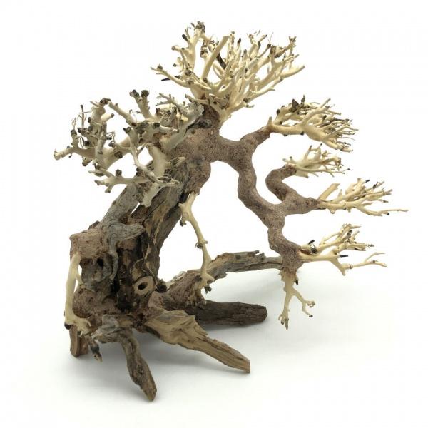 Bonsai Driftwood 25x20 cm (no. 82)