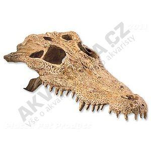 Exo Terra krokodýlí lebka